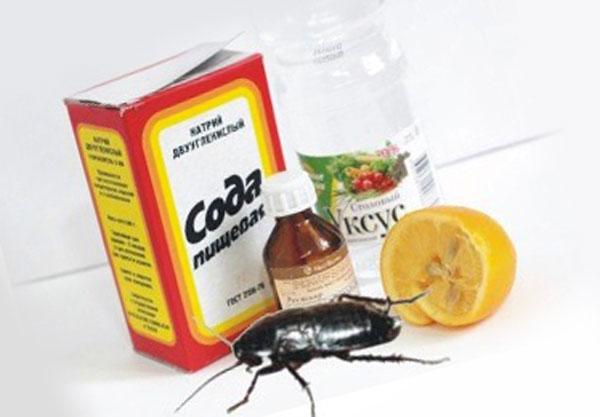 Самые эффективные средства от тараканов в домашних условиях навсегда